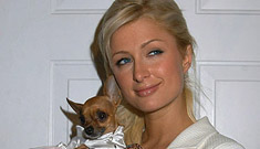 Paris Hilton thinks owning a bunch of pets qualifies her for motherhood