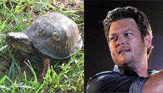 "Blake Shelton ""jokes"" about deliberately running over a box turtle: cruel or get over it?"