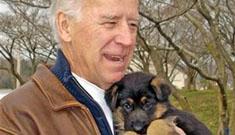 Joe Biden gets a German Shepherd puppy