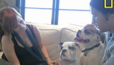 Ashlee Simpson and Pete Wentz consult the Dog Whisperer