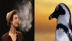 Pete Doherty Feeding Pot to local Penguins