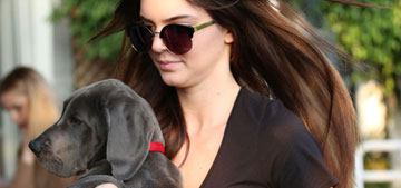 Kendall Jenner's cute new Great Dane puppy was a gift from … Rob Kardashian?