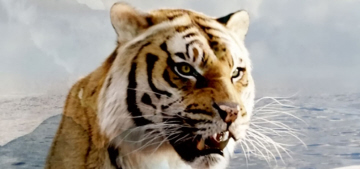 THR: Animal Humane Association complicit in hundreds of on-set animal deaths