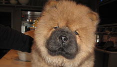 Martha Stewart's beloved dog dies in propane accident