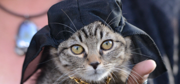 The LA premiere of 'Keanu' involved photogenic kittens in do-rags: yay?!