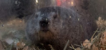 Punxsutawney Phil saw his shadow, prepare for six more weeks of winter