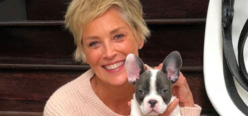 Sharon Stone's older French bulldog is not impressed with her new puppy