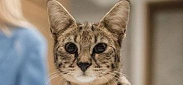 Sandra Lee found Justin Bieber's missing cat after several weeks