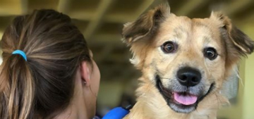 Humane Society head: People have really stepped up to help shelters