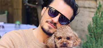 Orlando Bloom and Katy Perry's dog, Mighty, is missing in Montecito, CA