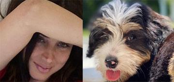 Ana de Armas got a new puppy & we haven't seen her with Ben Affleck in 2 weeks