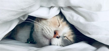 Sleep expert tips: keep your bedroom cool and dark, take a shower before bed