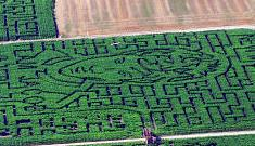 """""""The Twilight corn maze"""" afternoon links"""