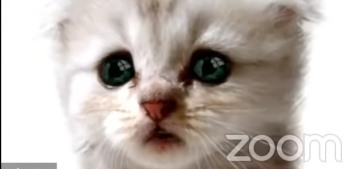 'I'm here live. I'm not a cat,' insists adorable Cat Lawyer on Zoom hearing