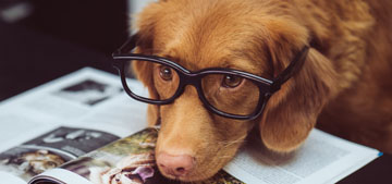 New study suggests that dogs have self-awareness