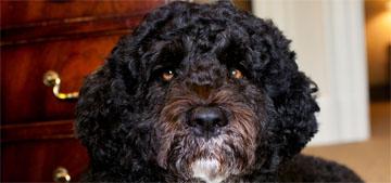 Barack Obama remembers Bo: 'if you want a friend, get a dog'