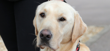 Dogs can be trained to smell covid at up to 94% accuracy