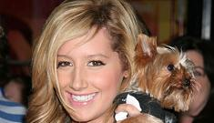 """""""Ashley Tisdale went for the classic 'deviated septum' nosejob"""" links"""