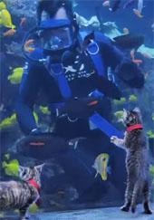 Kittens at the aquarium