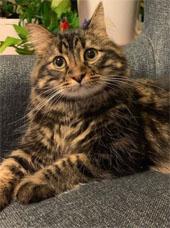 Journalist Dana Schwartz's cat