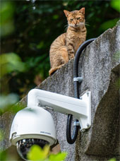 Cat on a ledge on top of a security camera. Credit: Jimmy Chan on Pexels