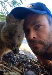 Chris Hemsworth posing with a cute quokka